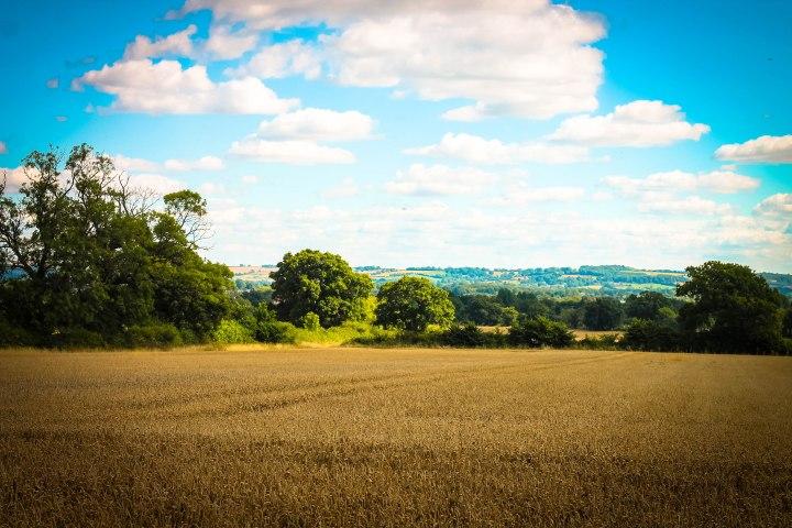 views-across-cornfield